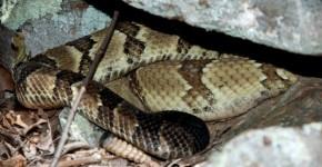 snake habitat