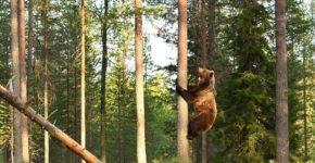 Camping Safety Understanding Predators