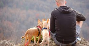 What Do I Need to Take My Dog Backpacking