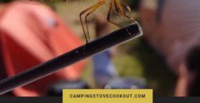 DEET or no DEET Which Bug Repellent is Best